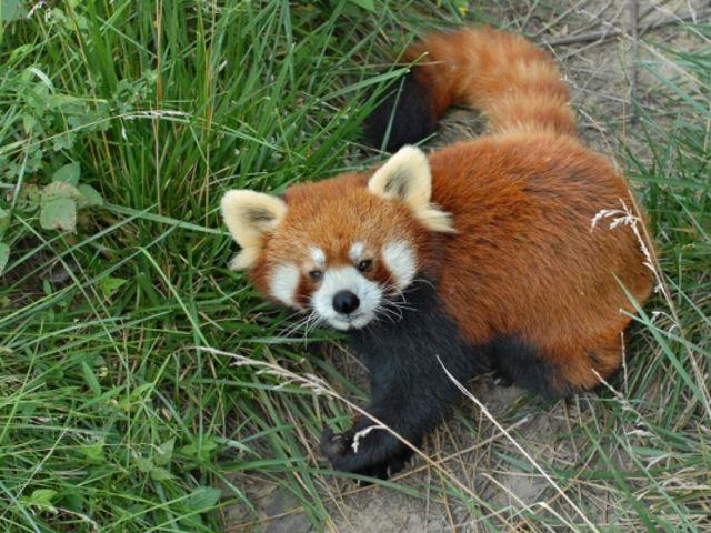 青岛森林野生动物世界 青岛开发区小珠山风景区森林野生动物园.