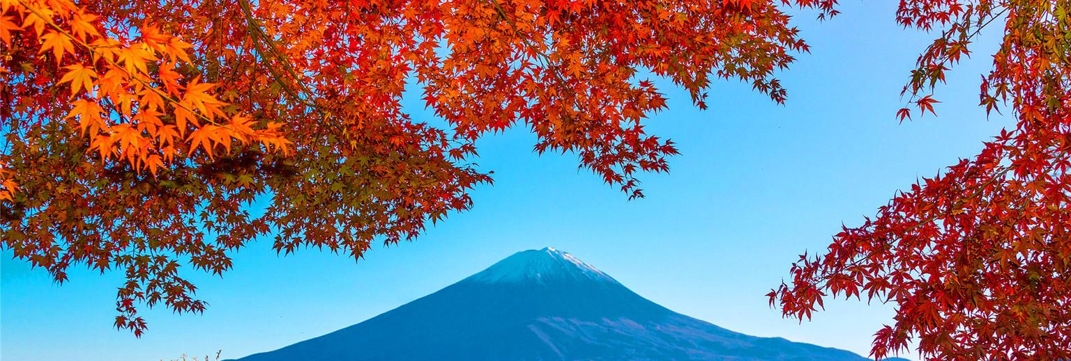 日本赏枫季,提前准备出游